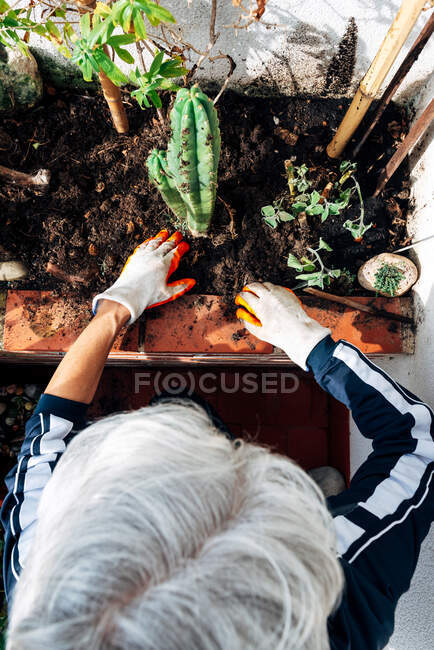 Faceless female gardener caring about plants in garden — Stock Photo