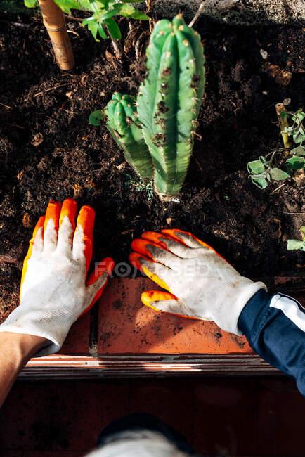 Садівник без обличчя дбає про рослини в саду. — стокове фото