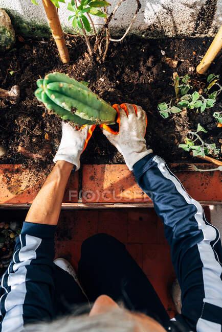 Jardinière sans visage qui se soucie des plantes dans le jardin — Photo de stock