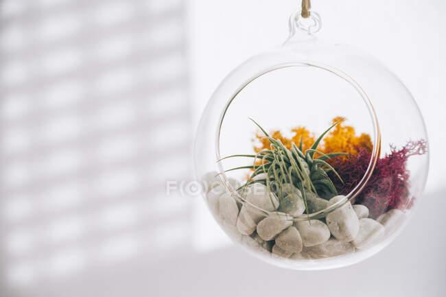 Сочные декоративные красочные растения внутри висит сферический прозрачный стеклянный террариум в светлом помещении — стоковое фото