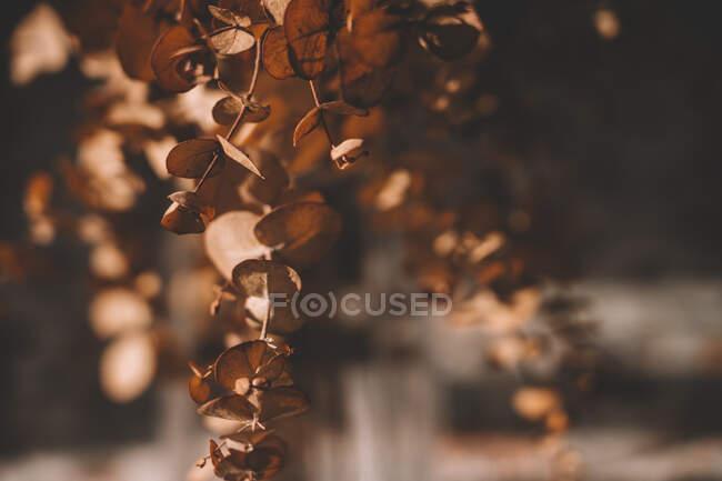 Plantas em vaso de vidro na mesa no dia ensolarado da primavera — Fotografia de Stock