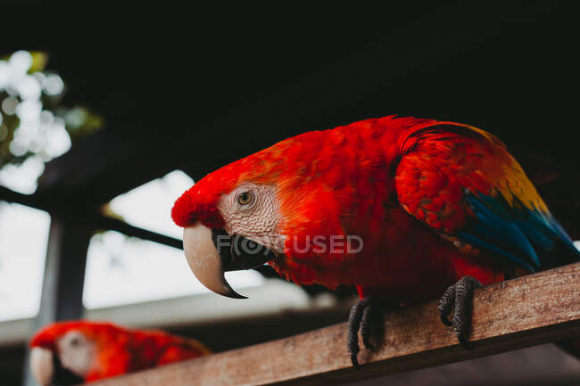 Большой экзотический красочный попугай в зоопарке — стоковое фото