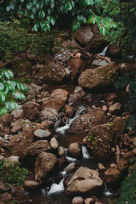 Desde arriba de pequeño arroyo con musgo verde creciendo en grandes rocas entre las plantas tropicales en verano - foto de stock