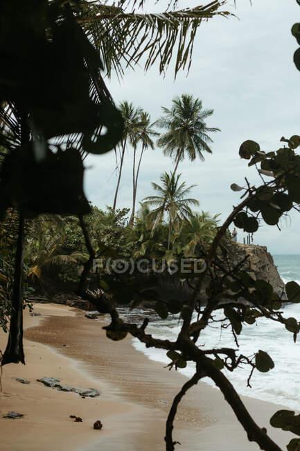 Spiaggia esotica di sabbia vuota con piante tropicali verdi e arbusti in tempo ventoso — Foto stock
