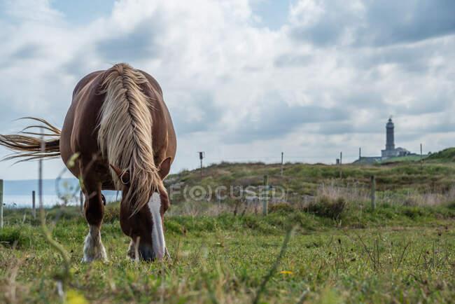 Лошадь пасутся на лугу в солнечный день — стоковое фото