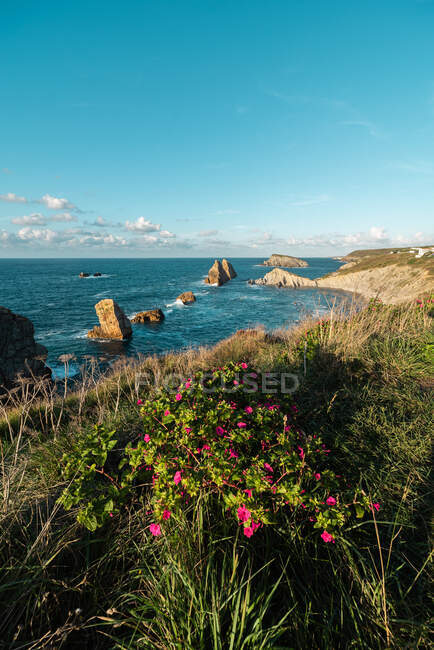 From above wonderful scenery of pink flowers blooming on rocky seashore of Costa Brava — Stock Photo