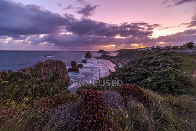 From above wonderful landscape with purple sky and pink flowers blooming on rocky seashore of Costa Brava — Stock Photo