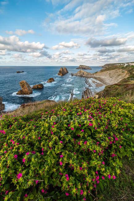 Над мальовничим краєвидом рожевих квітів, що цвітуть на скелястому узбережжі Коста - Брави. — стокове фото