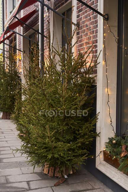 Кафе з барвистими прикрасами хвойних гілок і різдвяного дерева з садами в денний час. — стокове фото