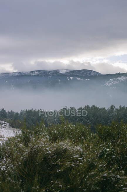 Von oben bunte Bäume am Hang des Hügels mit schneebedeckten Bergen und Himmel im Hintergrund — Stockfoto