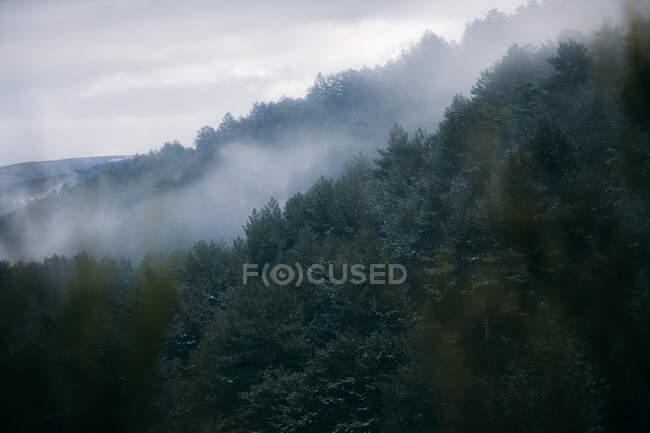 Сверху разноцветные деревья на склоне холма со снежными горами и небом на заднем плане — стоковое фото