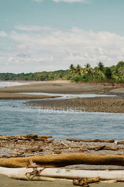 Malerische Landschaft mit sich biegendem Fluss und Baumstämmen an der Küste in Costa Rica — Stockfoto