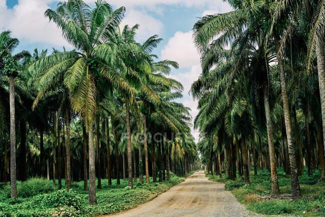 Malerische Landschaft der ländlichen Straße durch Palmenwald, die zum Meer in Costa Rica führt — Stockfoto