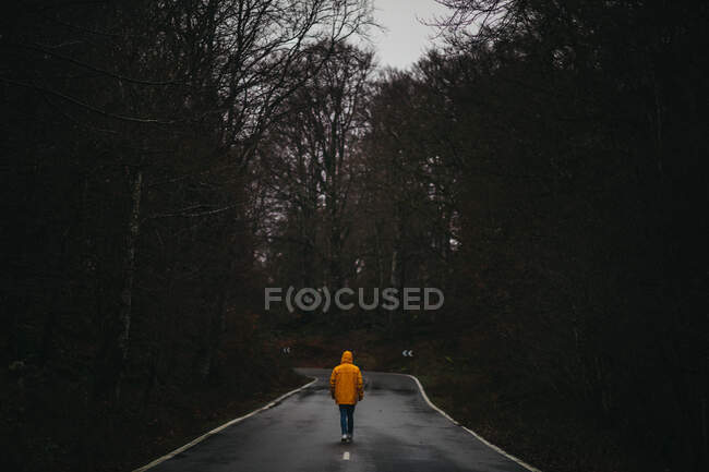 Вид на анонимного человека в желтой куртке, идущего по пустой асфальтовой дороге среди зеленых лесов — стоковое фото