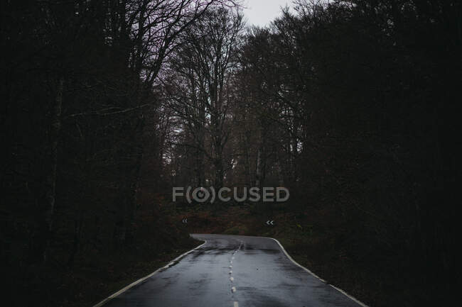 Empty wet asphalt road going through forest during cold autumn in countryside on rainy day — Stock Photo