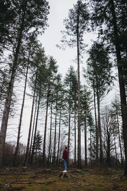 Vue latérale du jeune randonneur masculin en tenue décontractée debout sur la souche parmi les grands pins et levant les yeux vers l'automne — Photo de stock