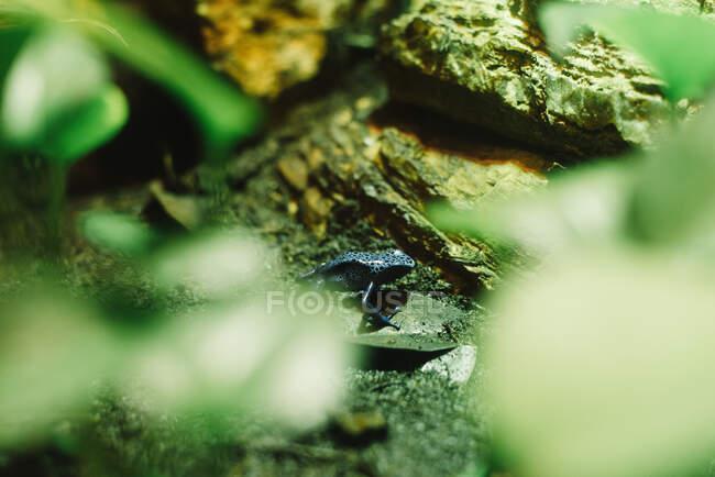 Зеленая лягушка прячется под аквариумом — стоковое фото