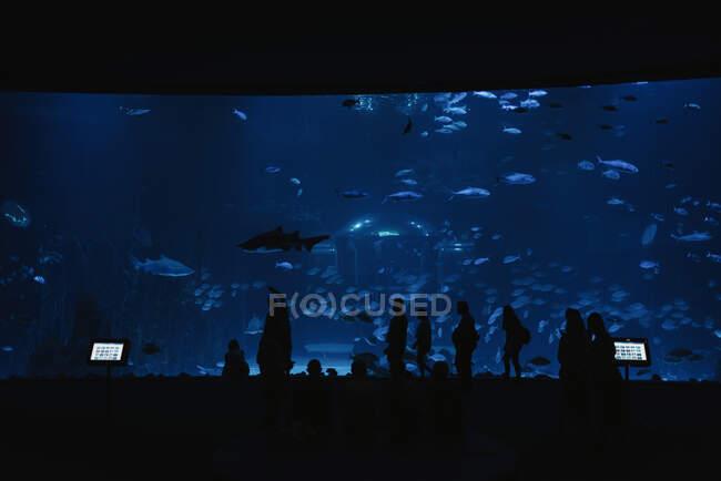 Вид сзади силуэтов людей перед большими современными аквариумами с рыбами в темноте — стоковое фото