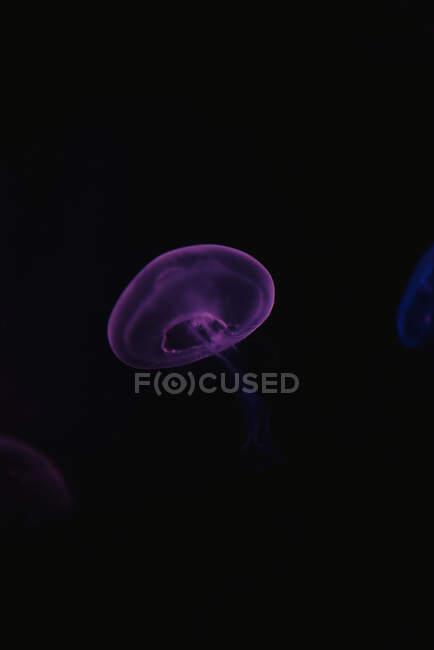 Ruhige transparente blaue Quallen unter türkisfarbenem Wasser auf verschwommenem Hintergrund — Stockfoto