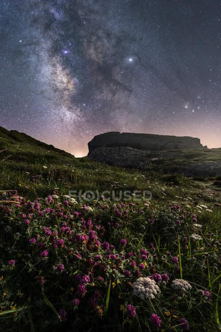 Fleurs de champ blanc et herbe verte sur la colline avec un ciel lumineux coloré avec la voie lactée sur le fond — Photo de stock