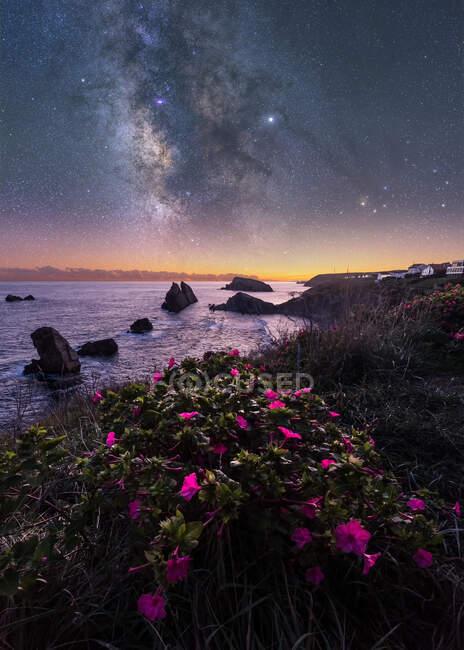 Fleurs de champ rose et herbe verte sur la colline avec un littoral calme et rocheux vide et un ciel lumineux coloré avec la voie lactée sur le fond — Photo de stock