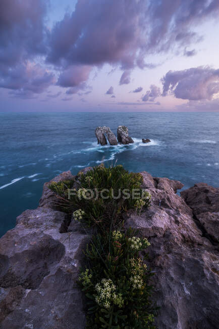 From above wonderful scenery of white flowers blooming on rocky seashore of Costa Brava — Stock Photo