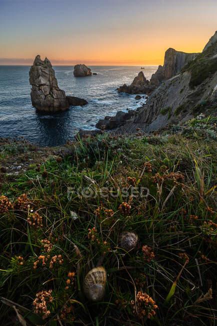 From above wonderful scenery of orange flowers blooming on rocky seashore of Costa Brava — Stock Photo