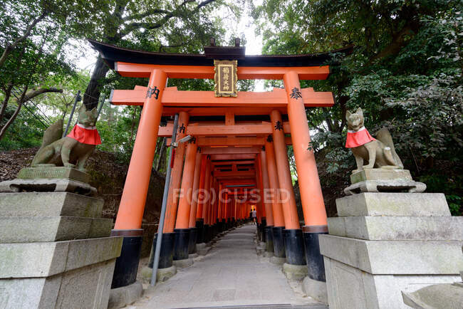 Traditional red torii gate tunnel with stone sculptures at entrance leading through green park in Japan — Stock Photo