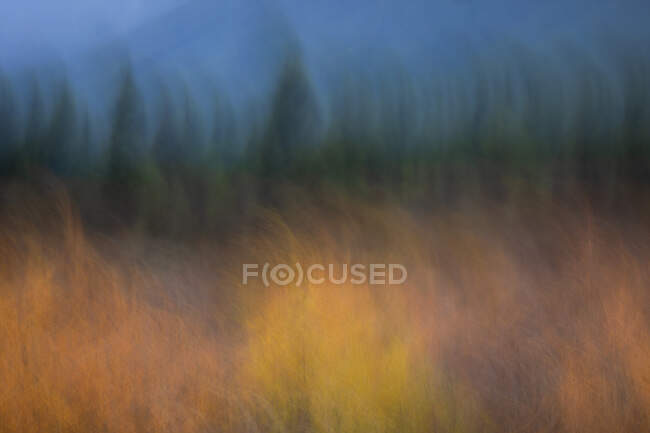 Blurred yellow and green autumn forest against dark blue sky for natural abstract background — Stock Photo