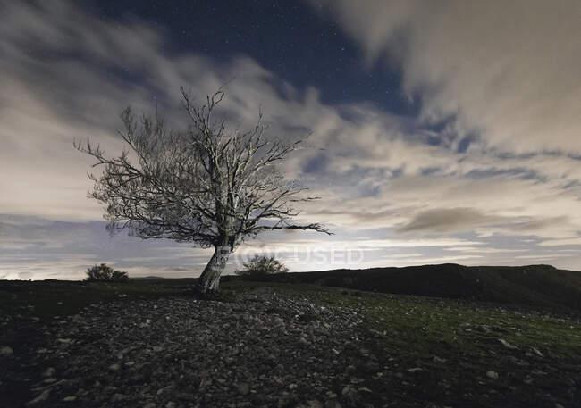 Arbre sec sans feuilles avec des branches ramifiées poussant sur la prairie contre un ciel nuageux avec des rayons de soleil dans la province d'Espagne Navarre — Photo de stock