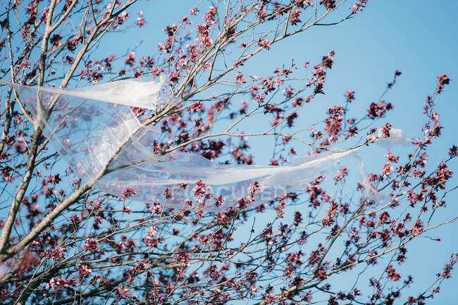 From below transparent plastic material waving on wind while hanging on branches against cloudless blue sky polluting the environment — Stock Photo
