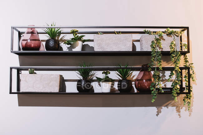 Simple geometric metal shelves with fresh potted plants and glass vases hanging on white wall in Navarre, Spain — Stock Photo