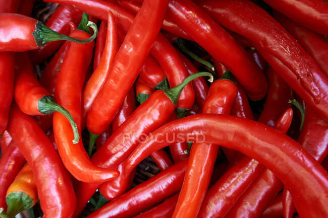 Top view of fresh red hot chili peppers placed in pile on market — Stock Photo