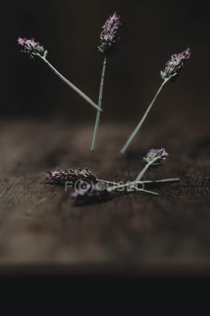 Small lavender flowers falling on shabby wooden table in dark room — Stock Photo