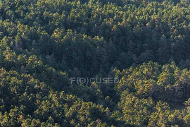 From above drone view of green trees growing in forest on sunny day in peaceful countryside — Stock Photo