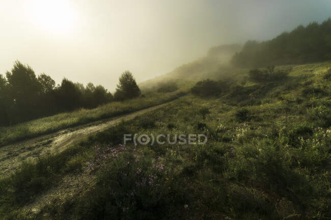 Травянистая тропа холма в туманное утро в мирной природе — стоковое фото