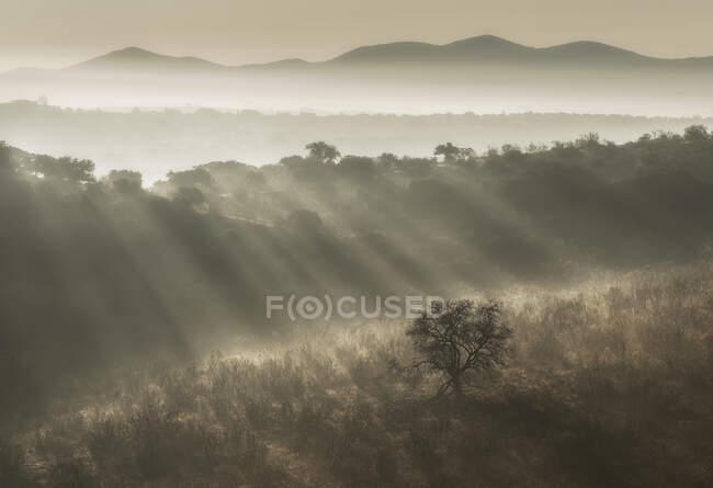 Rayons de soleil lumineux illuminant les collines herbeuses dans le brouillard matin dans la nature — Photo de stock