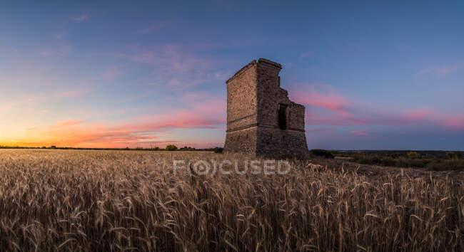 Стареющая разрушенная башня, расположенная в ржаном поле, против облачного закатного неба в сельской местности — стоковое фото