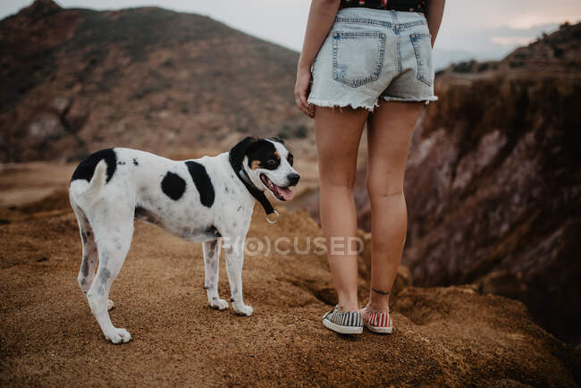 Cropped unrecognizable woman in casual clothes walking along rocky mountain with obedient dappled dog — Stock Photo