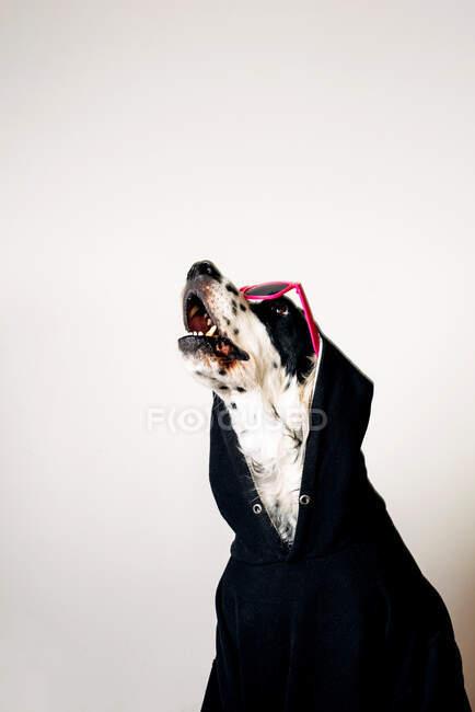 Netter Hund in Kapuzenpulli und Sonnenbrille — Stockfoto