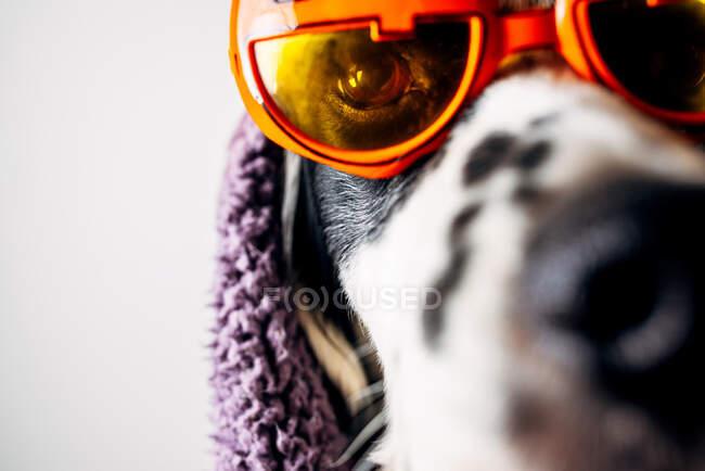 Netter Hund in Halloween-Brille unter warmer Decke — Stockfoto