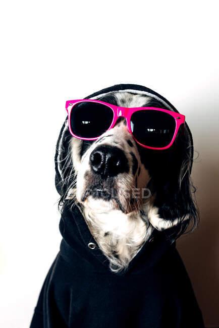 Cane carino con cappuccio e occhiali da sole — Foto stock