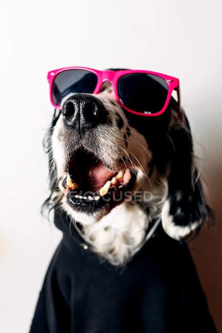 Счастливый англичанин в триумфальных солнцезащитных очках и черном капюшоне, сидящий у белой стены — стоковое фото