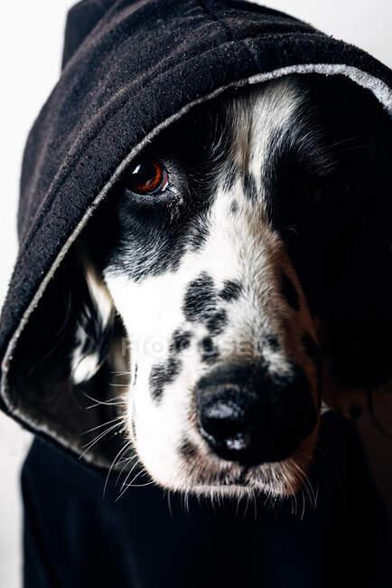 Lustiger Hund im schwarzen Kapuzenpulli — Stockfoto
