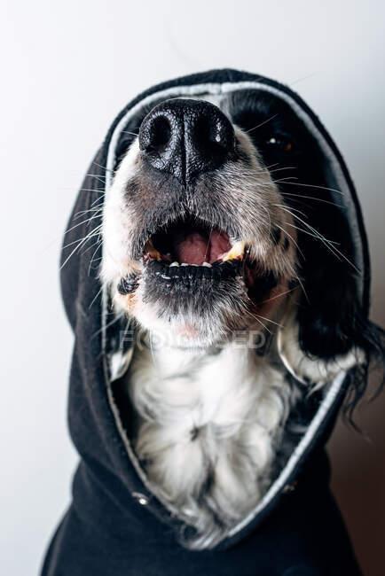 Perro divertido con capucha negra - foto de stock
