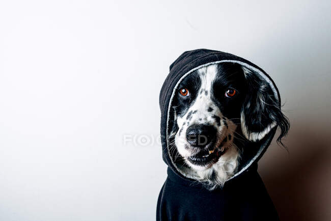 Funny dog in black hoodie — Stock Photo