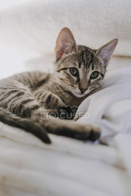 Adorabile gattino tabby guardando la fotocamera mentre sdraiato su una morbida coperta calda sul letto a casa — Foto stock