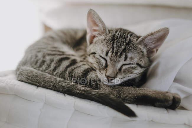 Lindo gatito acostado en una manta - foto de stock