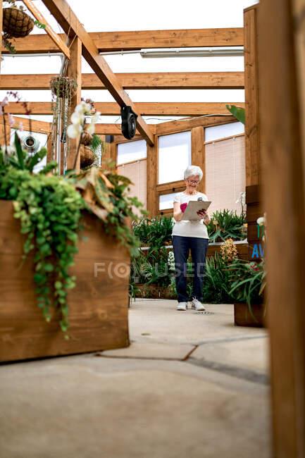 Полнотелый пожилой садовник пишет на планшете, стоя рядом с растениями в деревянной теплице — стоковое фото