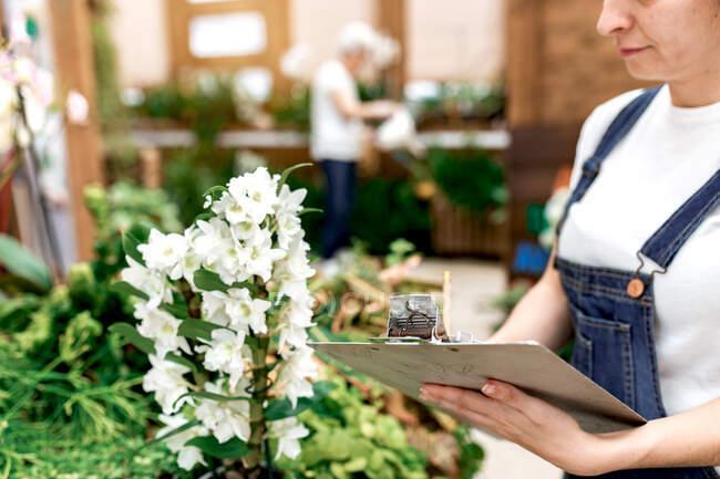 Нерозбірлива доросла жінка, що пише на дошці, стоячи біля рослини з білими квітками під час роботи в хатині. — стокове фото